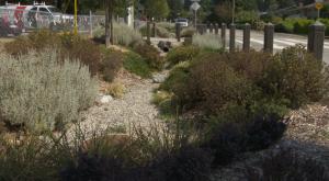 Delta Rain garden example