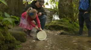 child releasing salmon fry