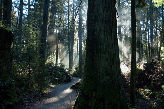 2014 Photo Contest First Place Winner, Chris McCue - Pacific Spirit Regional Park