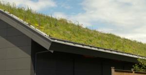 BMRPS green roof