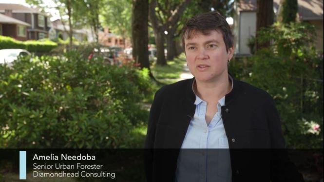 Urban Trees Amelia Needoba