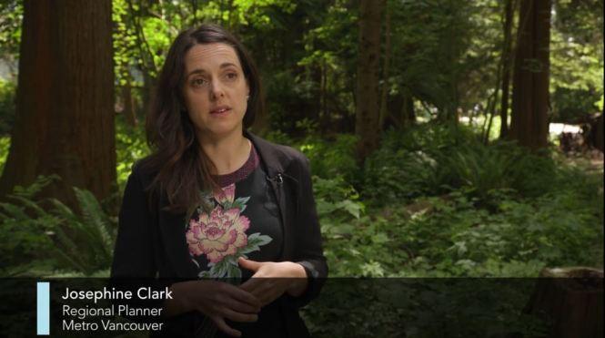 Urban Trees Josephine Clark